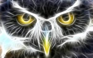 amy's owl