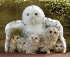 amy's owls2