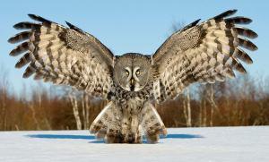 amy's owls3