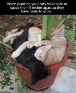 cat planting