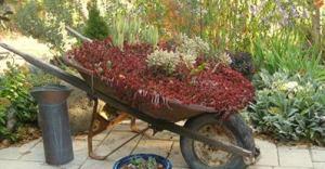 junk planter1