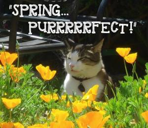 spring purrfect