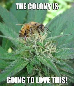 thc bee